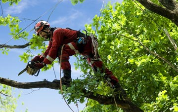 find trusted rated Castlereagh tree surgeons