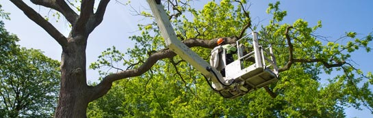 Castlereagh tree surgery services