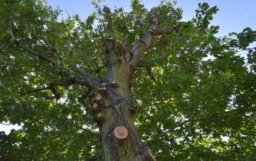 what is Castlereagh tree surgery?